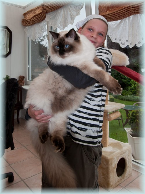 How Big Are Norwegian Forest Cats